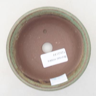 Bonsai do wnętrz - Duranta erecta Variegata - 3