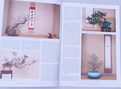 Bonsai i ogród japoński No.48 - 3