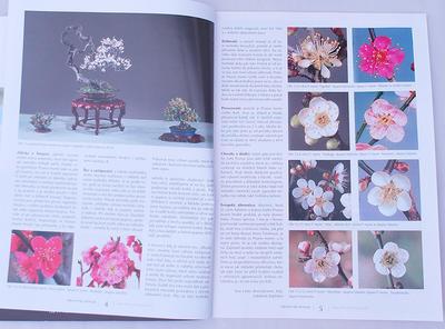 Bonsai i ogród japoński No.49 - 3