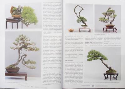 Bonsai i Ogród Japoński No.51 - 3