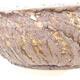 Ceramiczna miska bonsai 20 x 20 x 7 cm, kolor pęknięcia żółty - 3/3