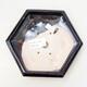 Ceramiczna miska bonsai 13,5 x 15 x 4 cm, kolor czarny - 3/3