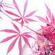 Outdoor bonsai - Acer palm. Atropurpureum-czerwony liść palmowy - 3/3