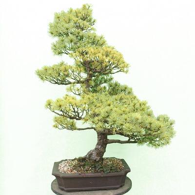 Miska Bonsai 29 x 23 x 8,5 cm, kolor szaro-beżowy - 3