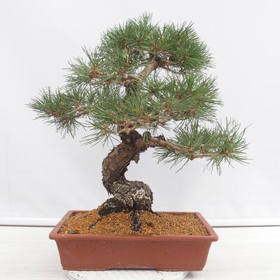 Miska Bonsai 24 x 19 x 7,5 cm, kolor beżowy - 3