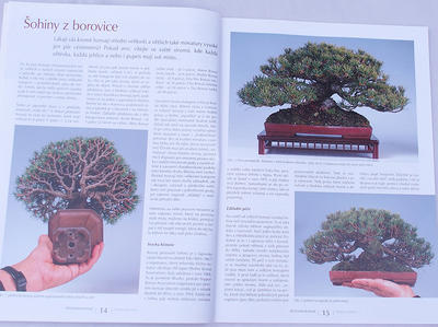 Bonsai i ogród japoński No.48 - 4