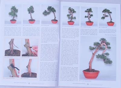 Bonsai i ogród japoński No.49 - 4