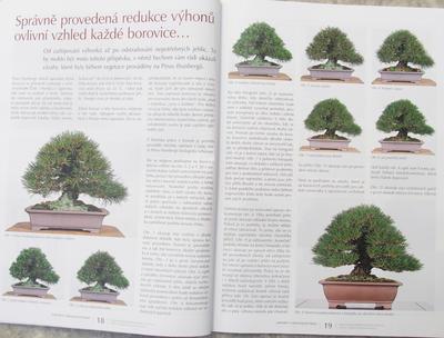 Bonsai i Ogród Japoński No.51 - 4