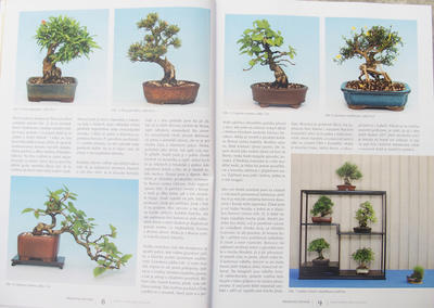 Bonsai i ogród japoński nr 52 - 4