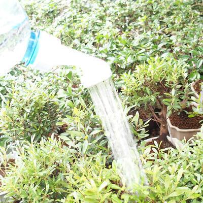 Plastikowy zraszacz do butelek bonsai 20 szt - 4