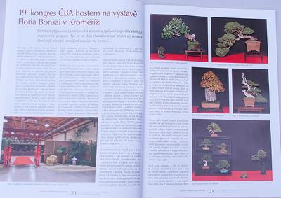 Bonsai i ogród japoński No.48 - 5