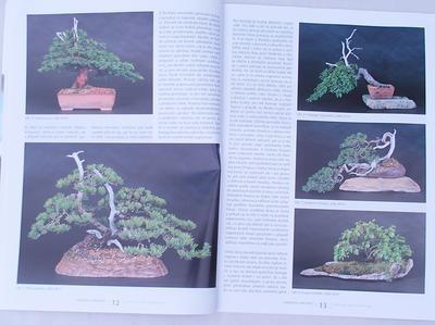 Bonsai i ogród japoński No.49 - 5