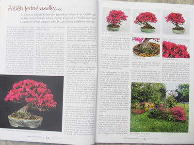 Bonsai i ogród japoński nr 52 - 5