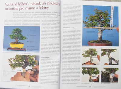 Bonsai i ogród japoński nr 52 - 6