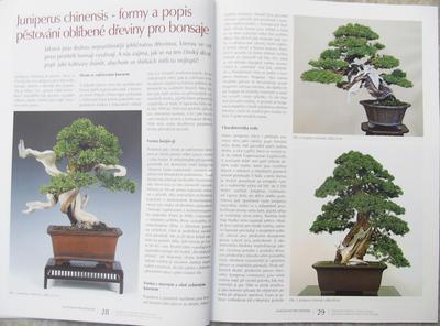Bonsai i ogród japoński nr 52 - 7