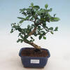 e-Bonsai - Bonsai do wnętrz